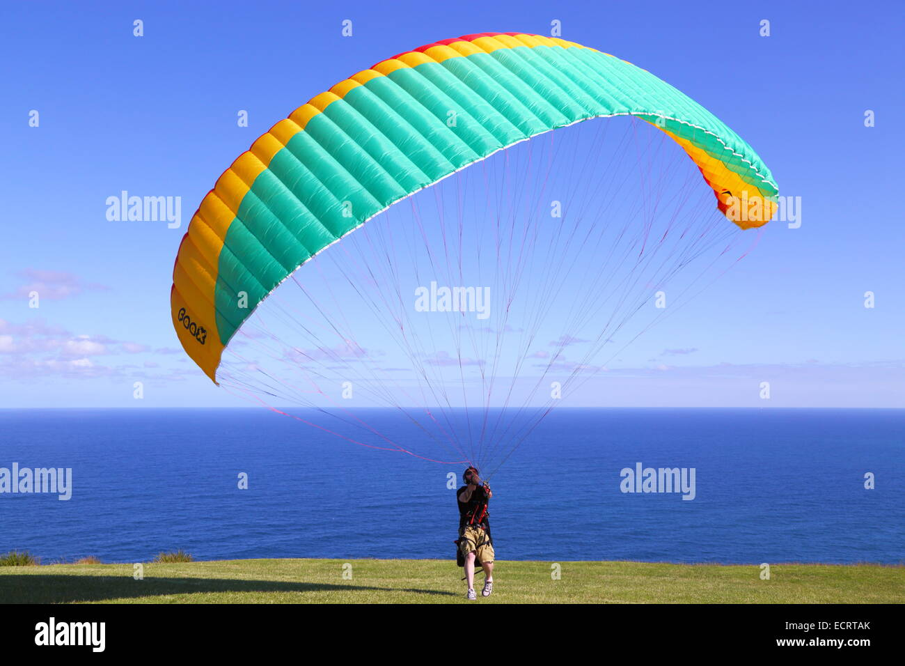 A man prepares his paraglider to lift off and soar over the Pacific Ocean off Bald Hill, New South Wales, Australia. - Stock Image
