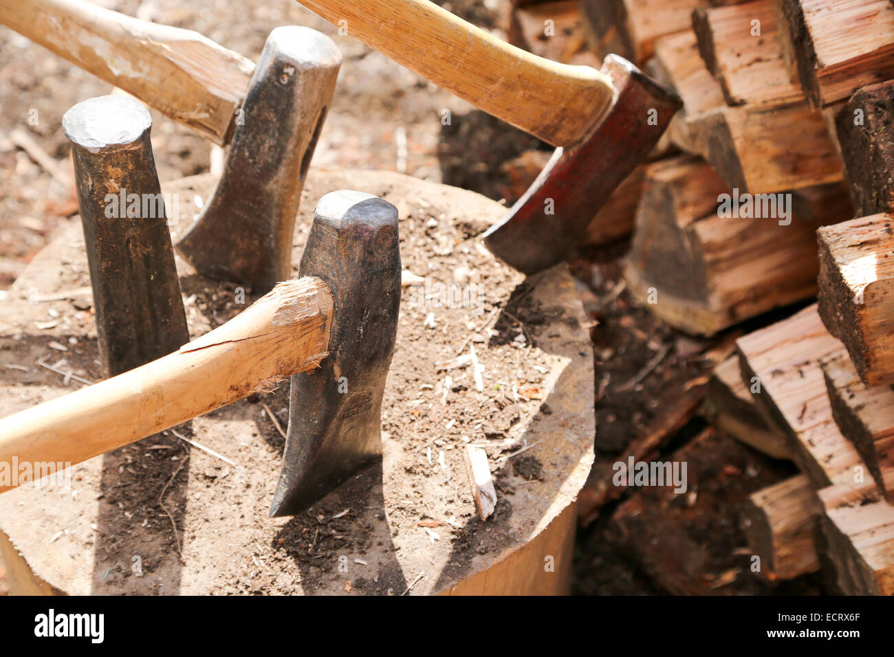 A large block of wood holds several axes for wood splitting during spring clean up weekend at the cottage - Stock Image