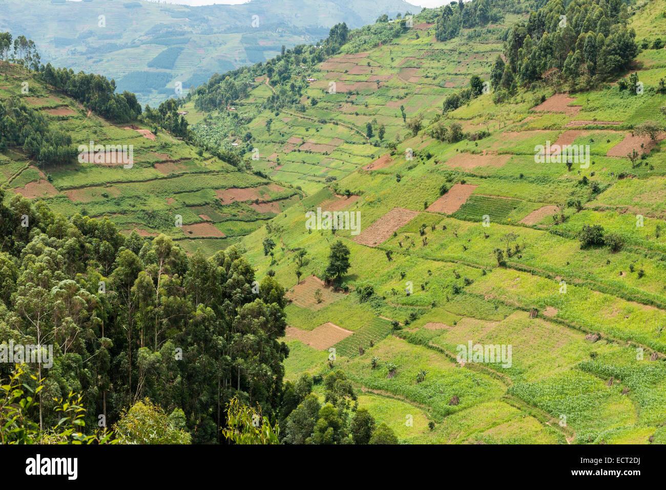 Cultivated fields on slopes, Uganda - Stock Image