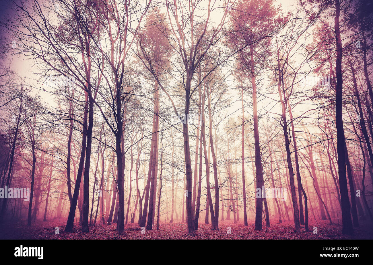 Retro filtered picture of mysterious forest background. - Stock Image