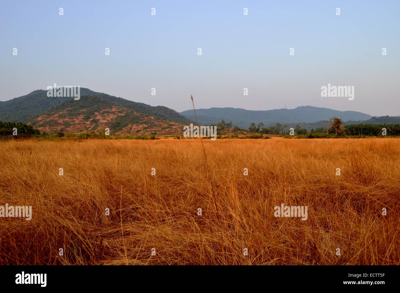hill and grassland - Stock Image