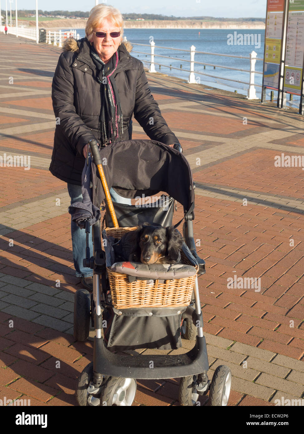 A woman taking her dog out in a buggy - Stock Image