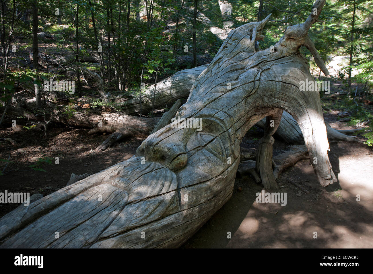 Carved Tree In The Shape Of An Elf El Bosque Tallado The Carved Forest El Bolson Argentina Stock Photo Alamy