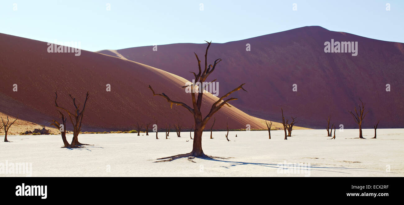 View of sand dunes and camel thorn trees in sunny desert - Stock Image