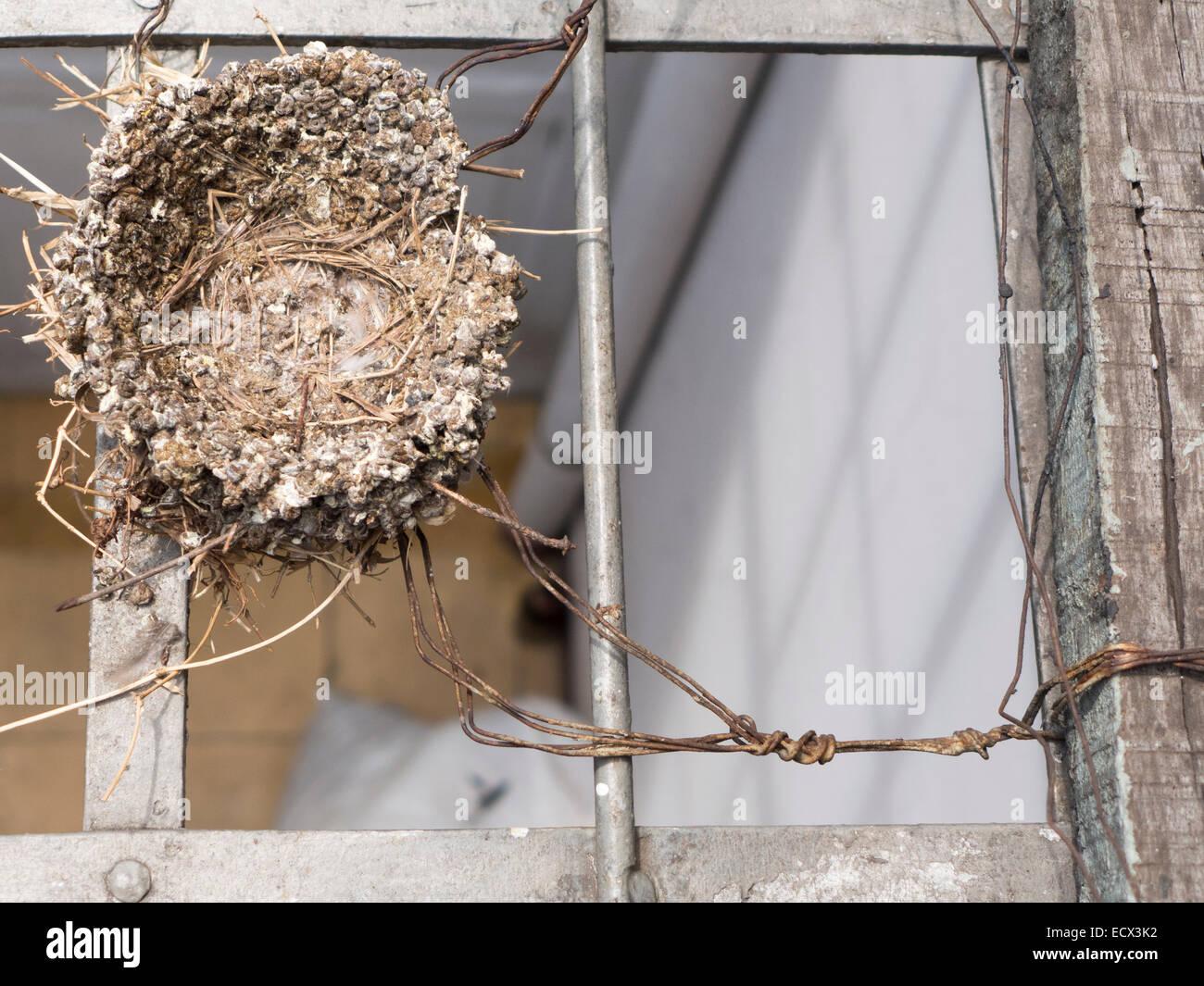 Nido Di Tortore Sul Balcone wire nest stock photos & wire nest stock images - alamy