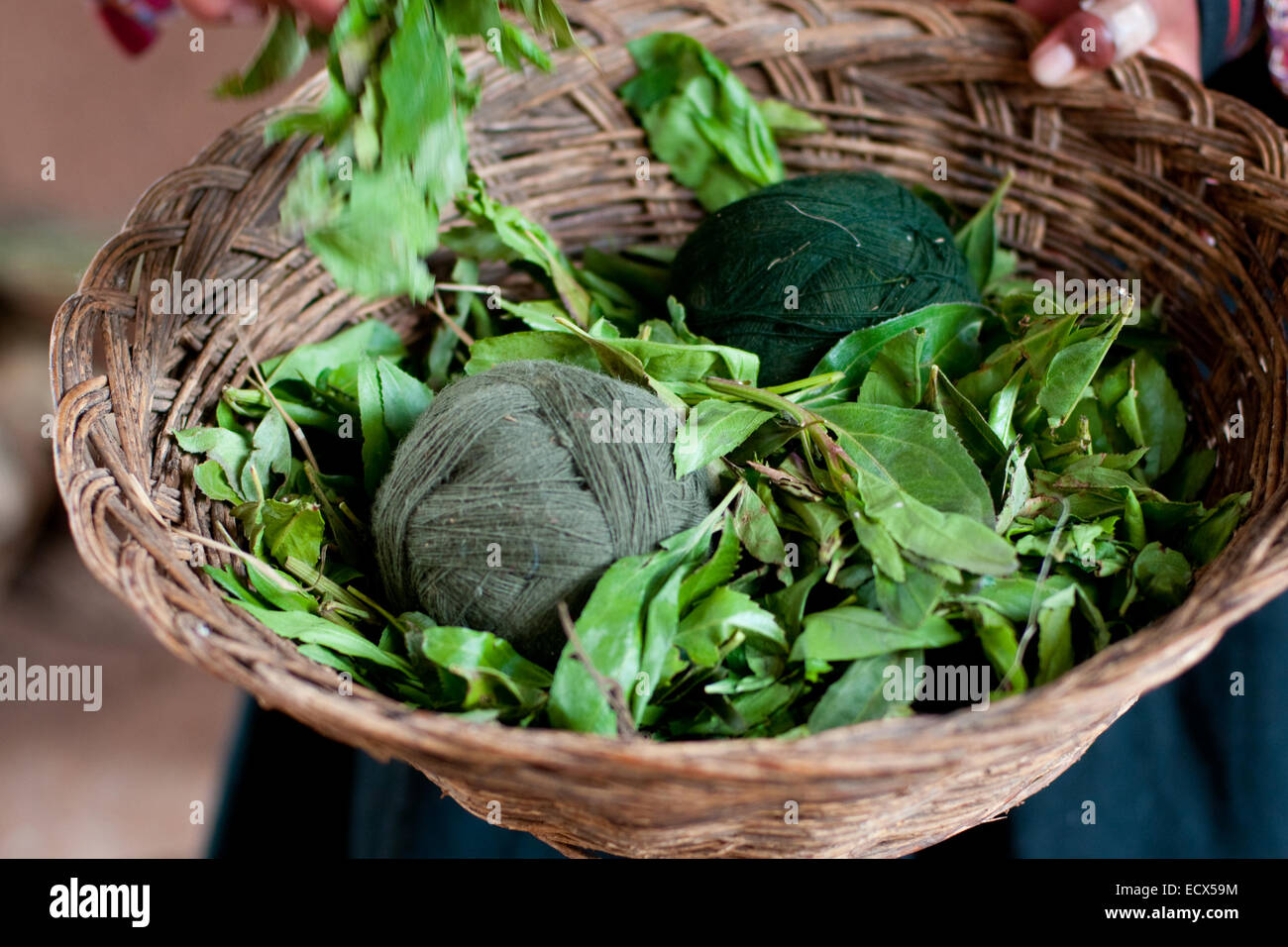 the picture of the green wool clews, filled whole frame - Stock Image