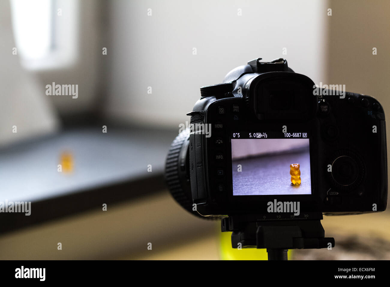 Indoor shooting a photo of a yellow gummy bear with a black DSLR (back of the camera) - Stock Image