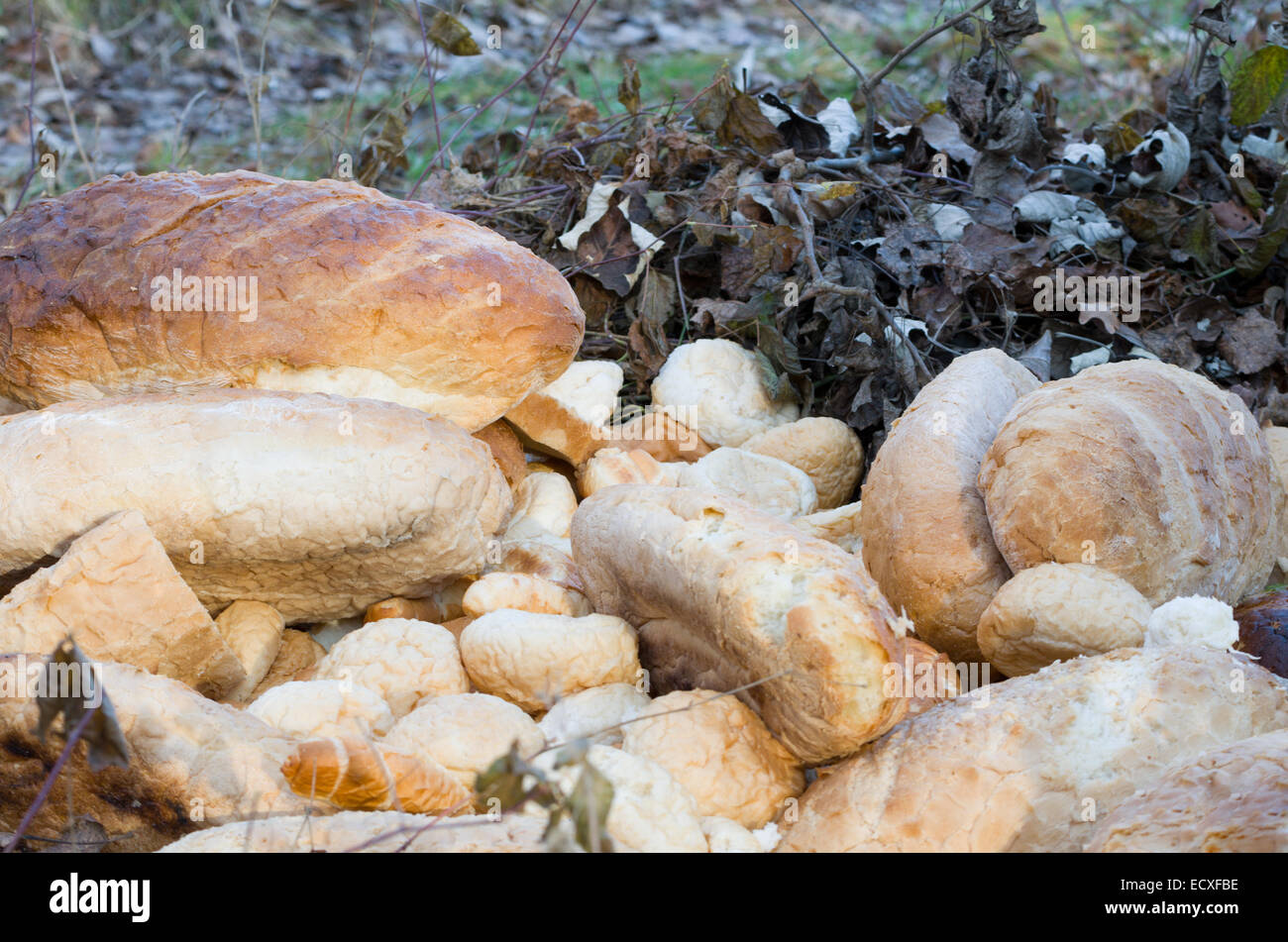 Old Breads in the Nature Left for Wild Animals Closeup - Stock Image