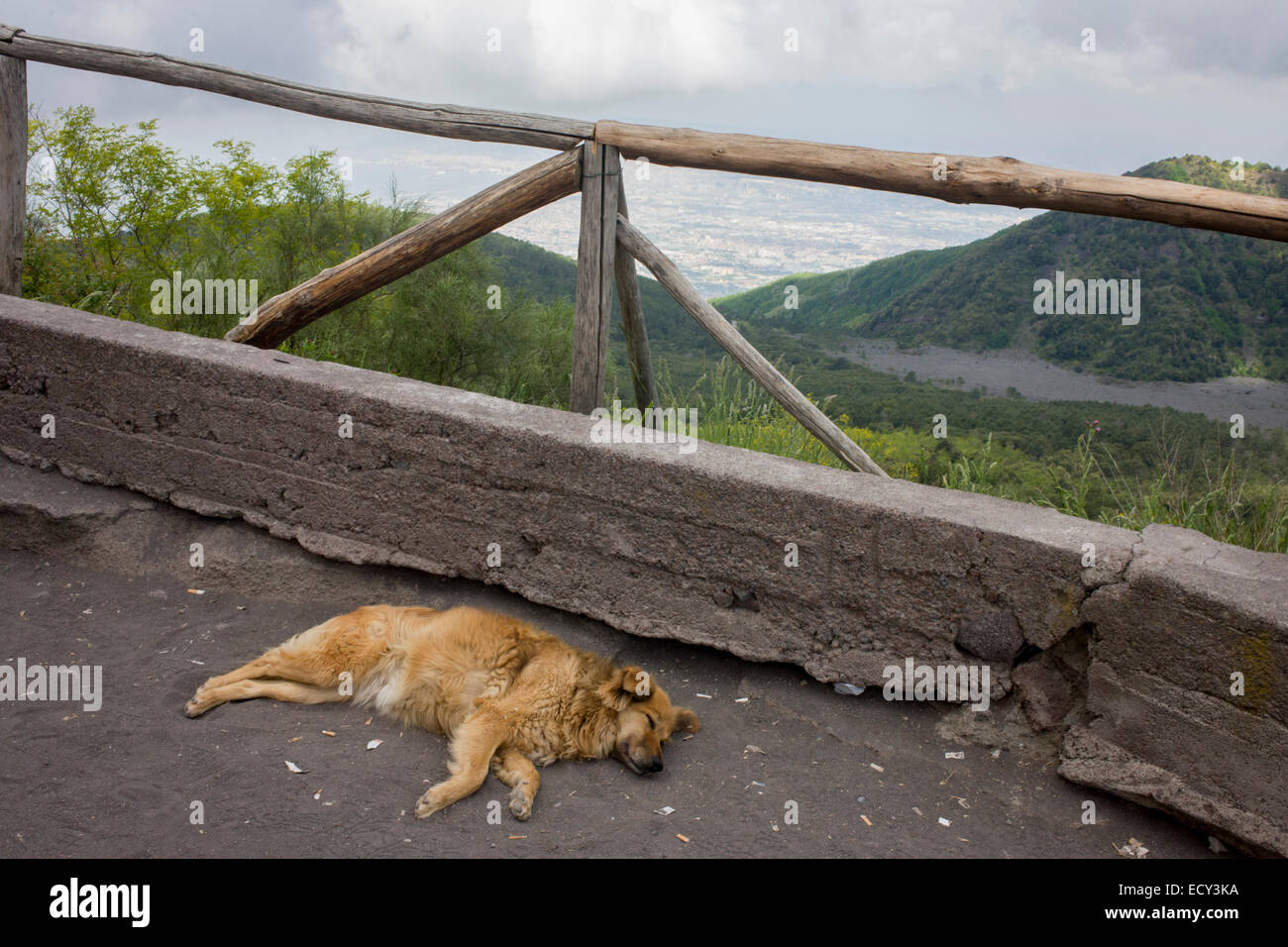 Sleeping dog on lava dust ground on the slopes of Vesuvius. - Stock Image