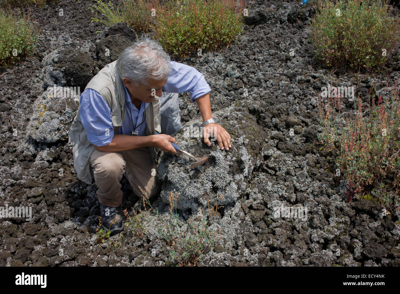 Giuseppe Mastrolorenzo, volcanologist with the Osservatorio Vesuviano and leading authority on local geology (see - Stock Image