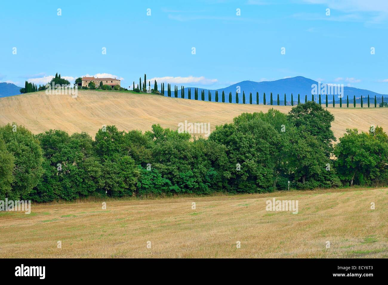 Farmhouse with cypress trees in the Val d'Orcia, Province of Siena, Tuscany, Italy - Stock Image