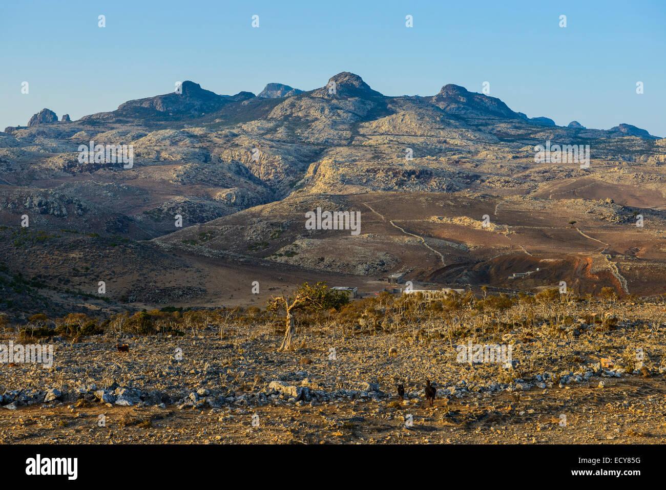 Giant rock mountains at the Dixsam plateau, Socotra, Yemen - Stock Image