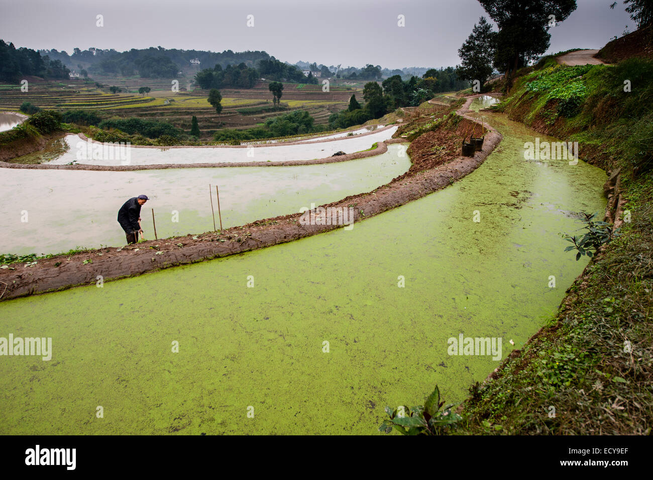 Traditional farming in terraces, Sichuan province, china - Stock Image