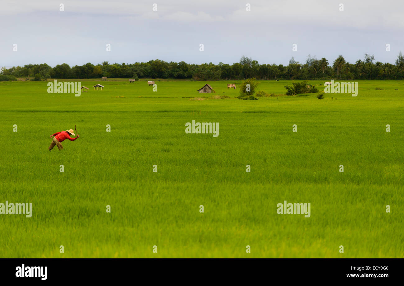 Farmers on rice terraces of South Luzon, Philippines - Stock Image