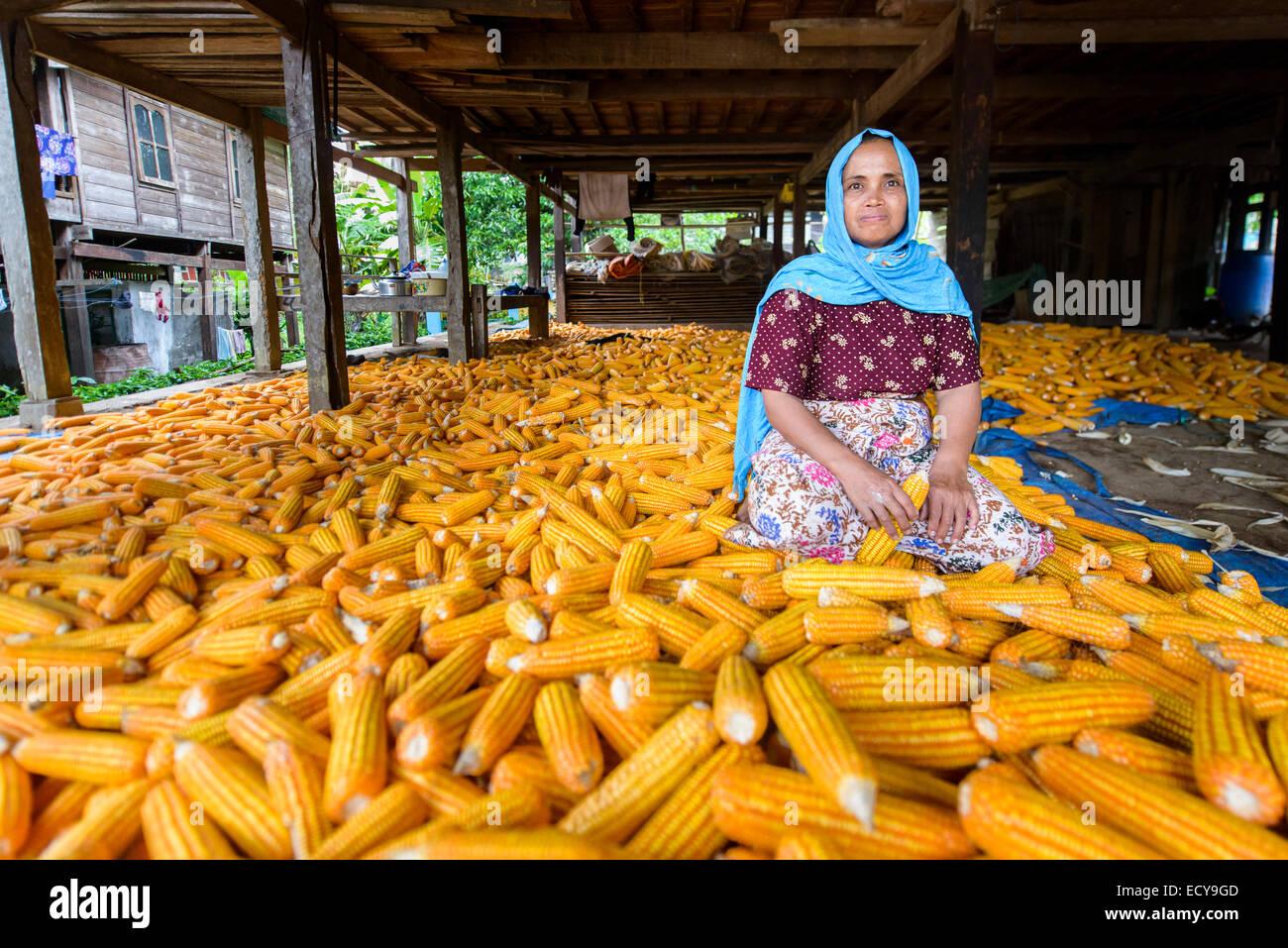 Woman sitting between corn cobs, Sulawesi, Indonesia - Stock Image