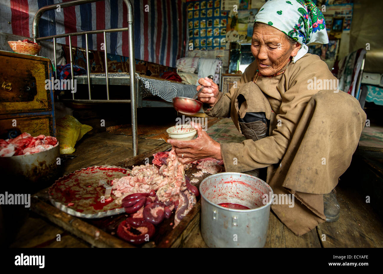 A nomad woman storing the guts, Mongolia - Stock Image