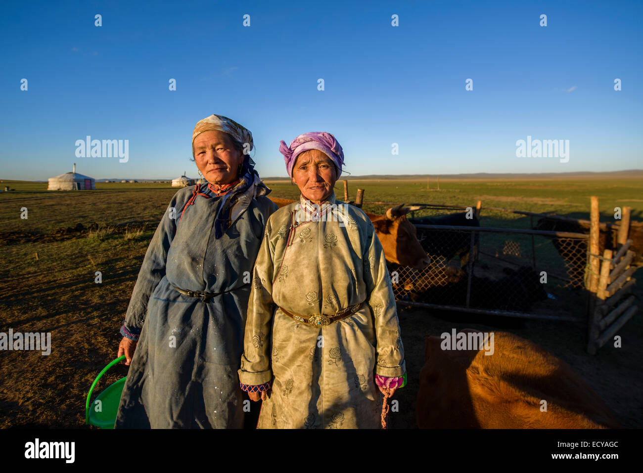 Mongolian nomad women milking cows on the steppe, Mongolia Stock Photo