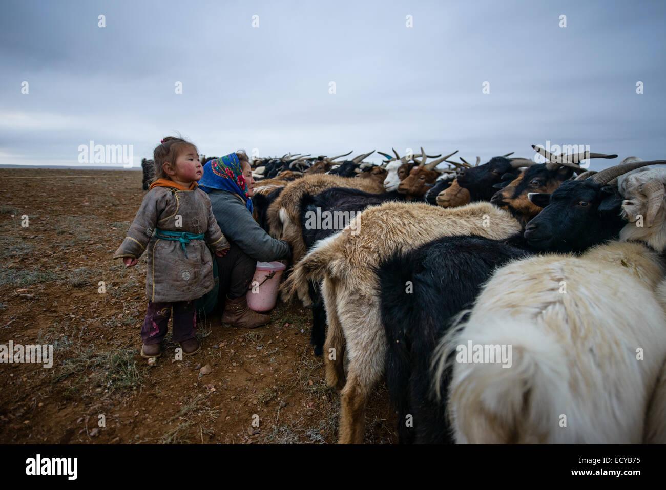 Mongolian nomads milking goats on the Gobi desert, Mongolia - Stock Image