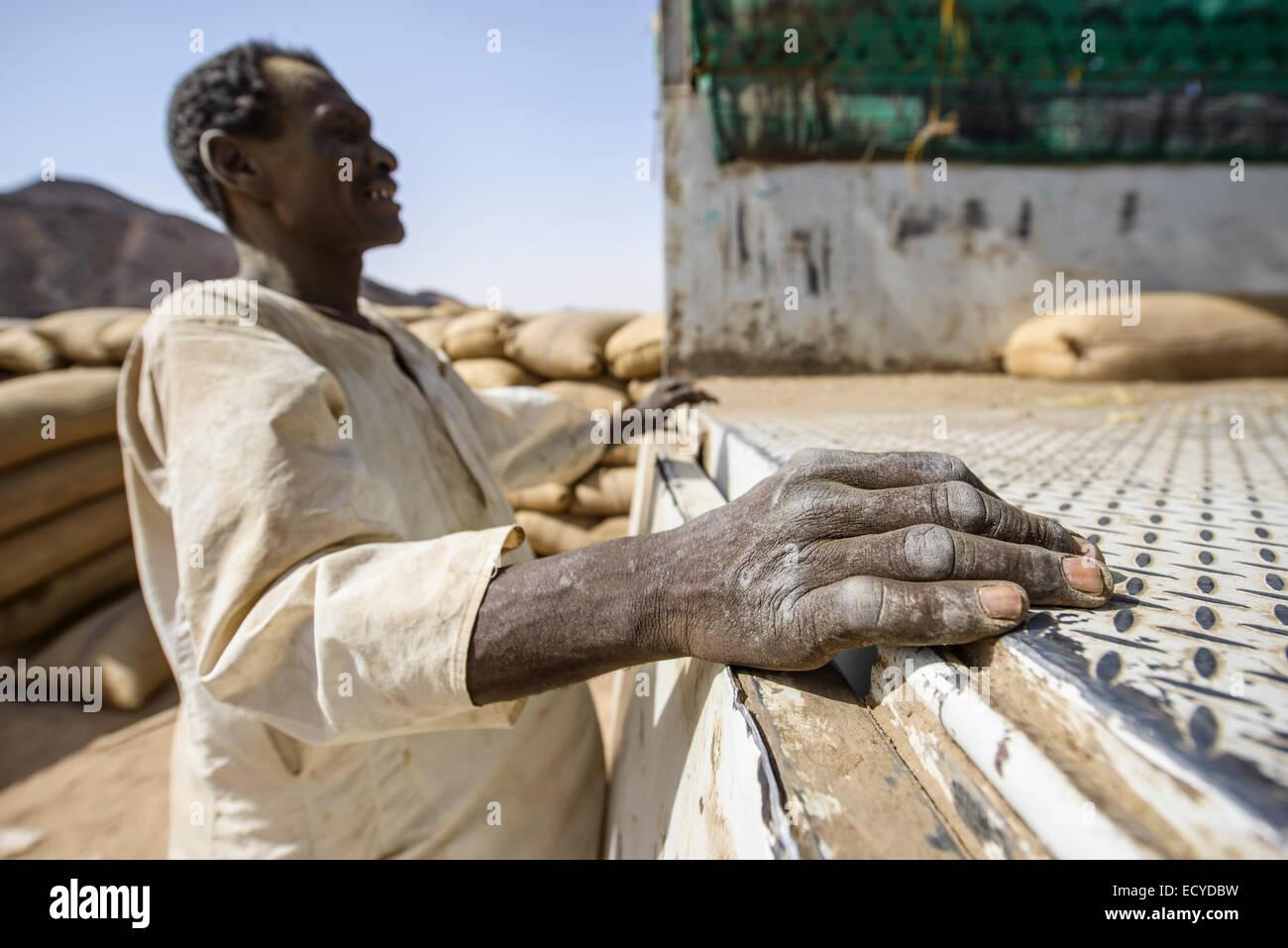 Sudanese man unloading sacks of faba beans in the Sahara desert, Sudan - Stock Image