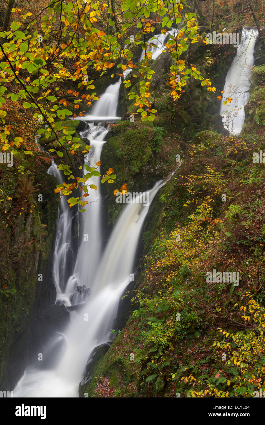 Stockghyll Force Waterfalls Ambleside Cumbria, Lake District, UK - Stock Image