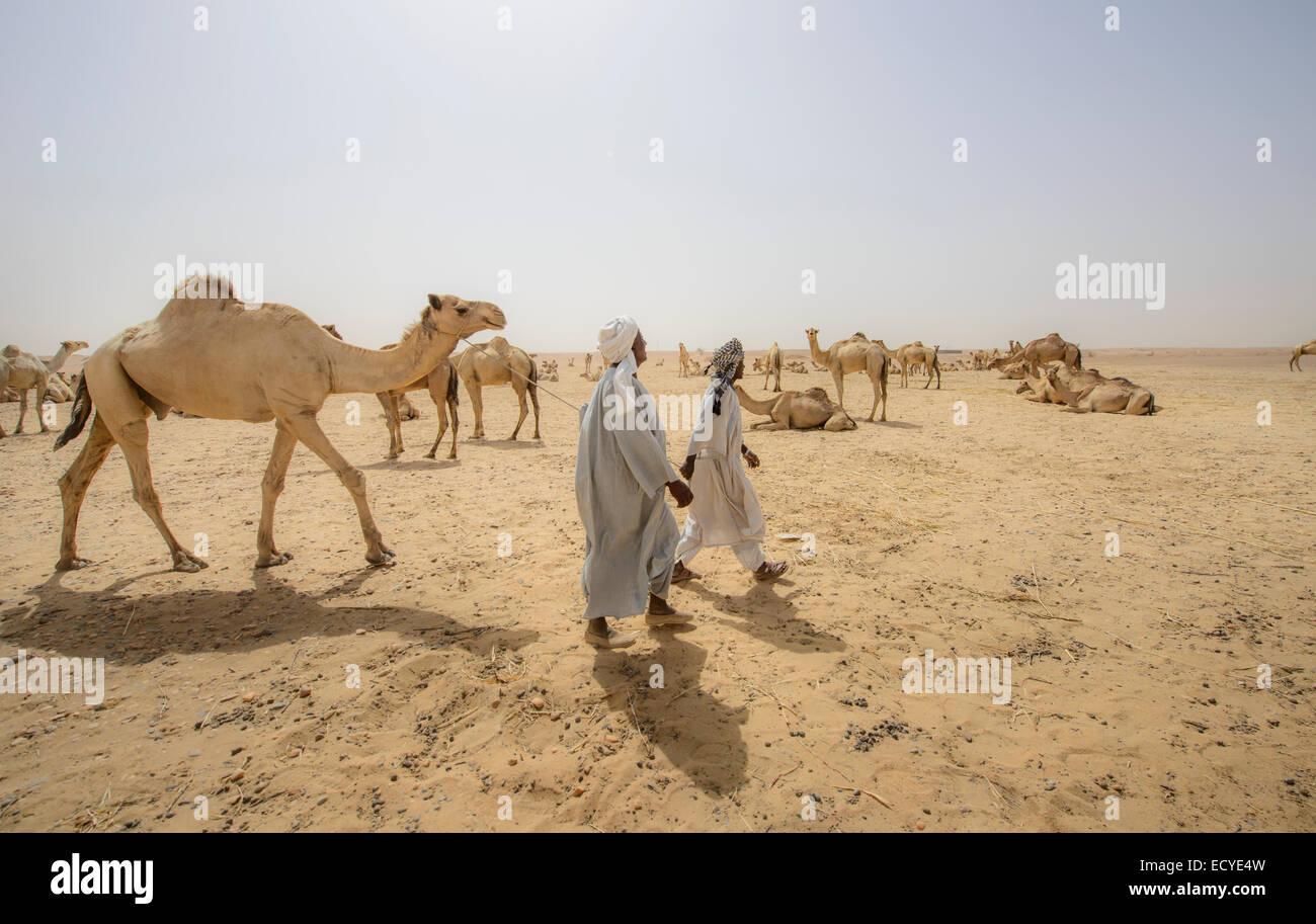 Camel herders of the Sahara desert, Sudan - Stock Image