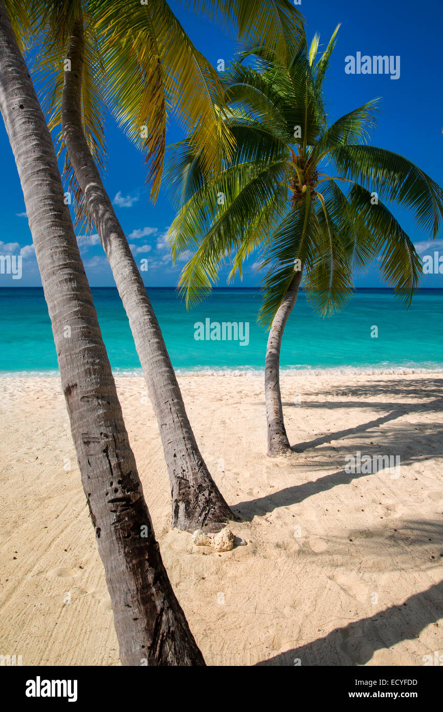 Palm trees and turquoise water along Seven-Mile Beach, Grand Cayman, Cayman Islands, West Indies - Stock Image