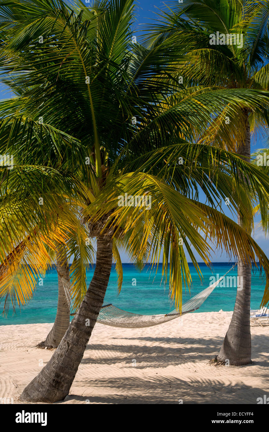 Palm trees and hammock along Seven-Mile Beach, Grand Cayman, Cayman Islands, West Indies - Stock Image
