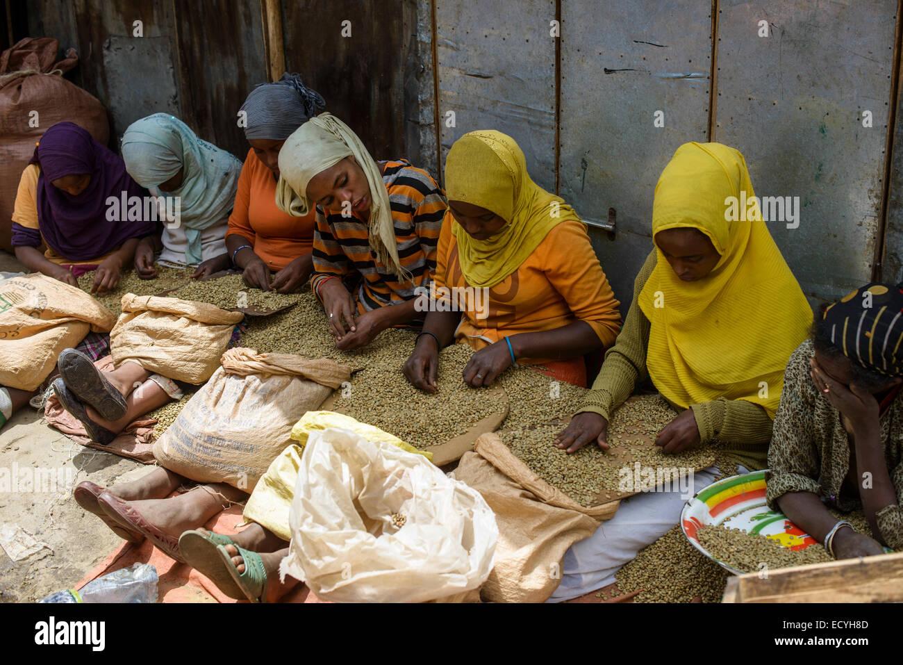 Muslim women selecting coffee beans, Mercato of Addis Ababa, Ethiopia - Stock Image