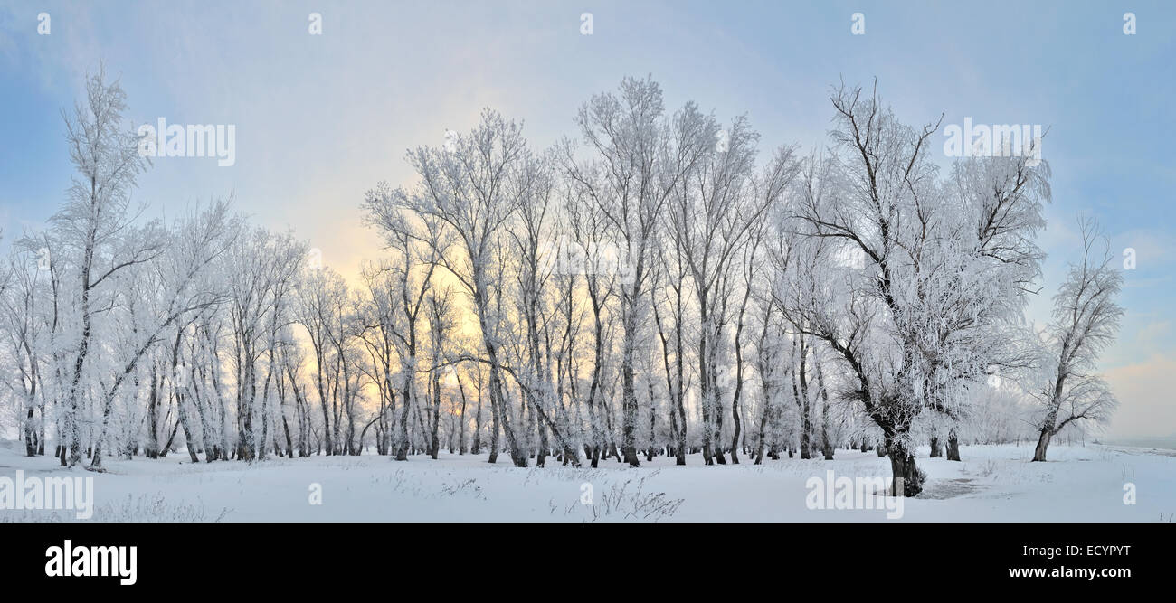 Frozen Trees On Winter Landscape And Blue Sky