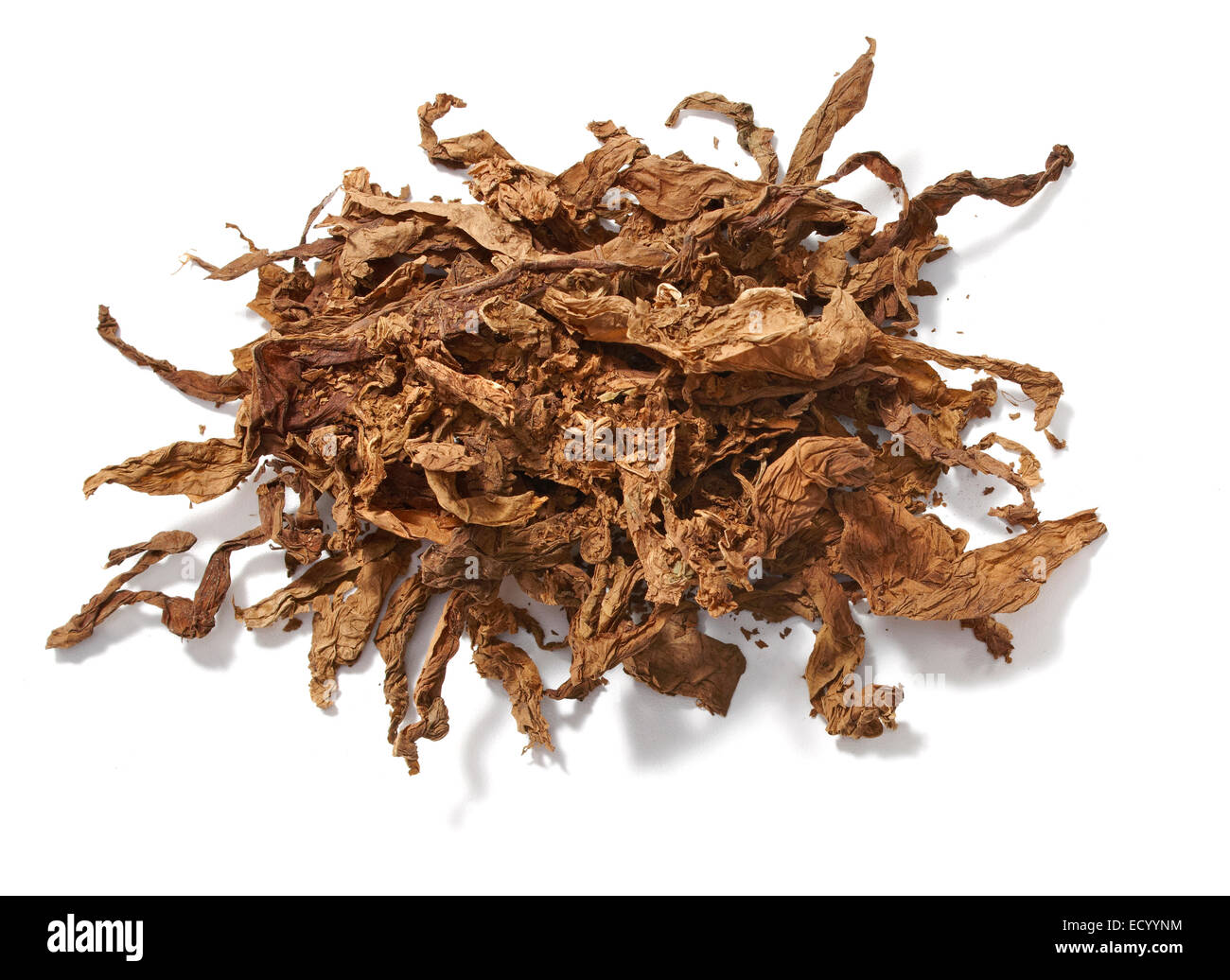 tobacco leaves - Stock Image