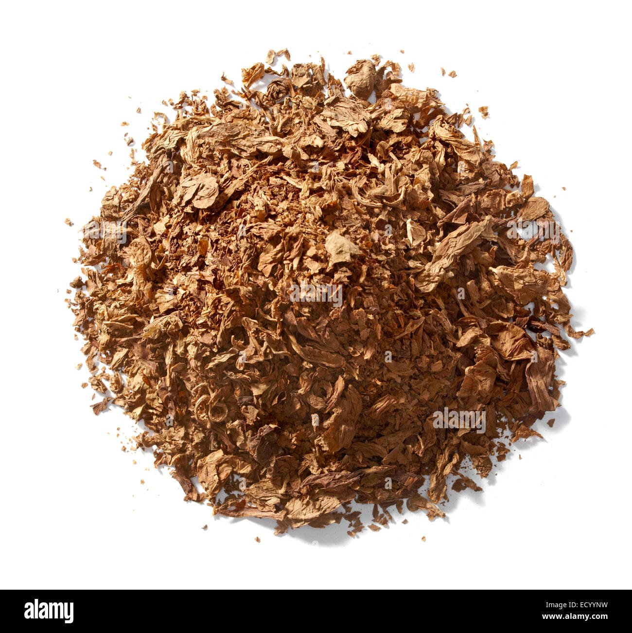 tobacco pile photographed on a white background - Stock Image