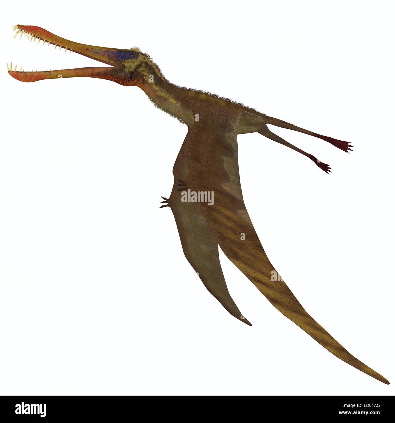 Anhanguera is a pterosaur dinosaur which ate fish during the Cretaceous Period of Brazil. - Stock Image