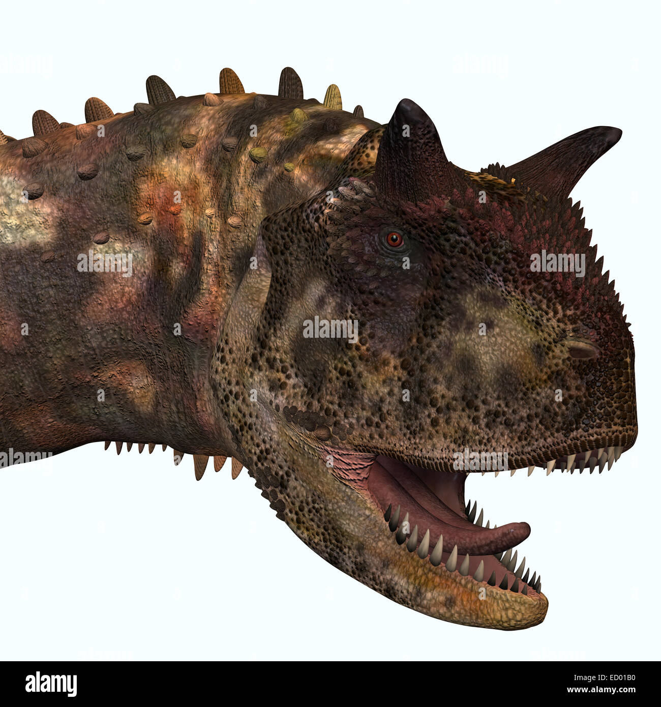 Carnotaurus was a theropod carnivorous dinosaur that lived in Argentina in the Cretaceous Period. Stock Photo