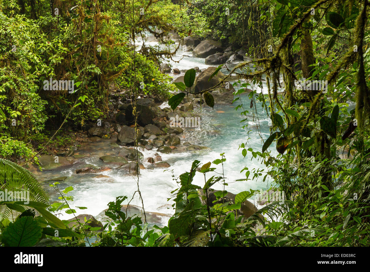 The cerulean blue waters of the Rio Celeste in the rainforest in Volcan Tenorio National Park, Costa Rica. - Stock Image
