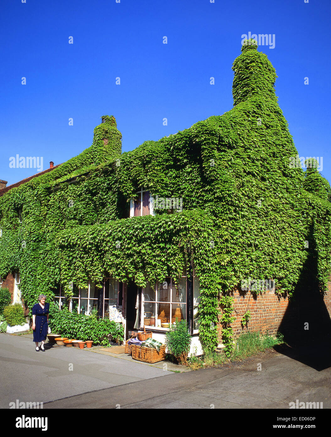 House covered in ivy, Wycombe End, Old Beaconsfield, Buckinghamshire, England, United Kingdom - Stock Image
