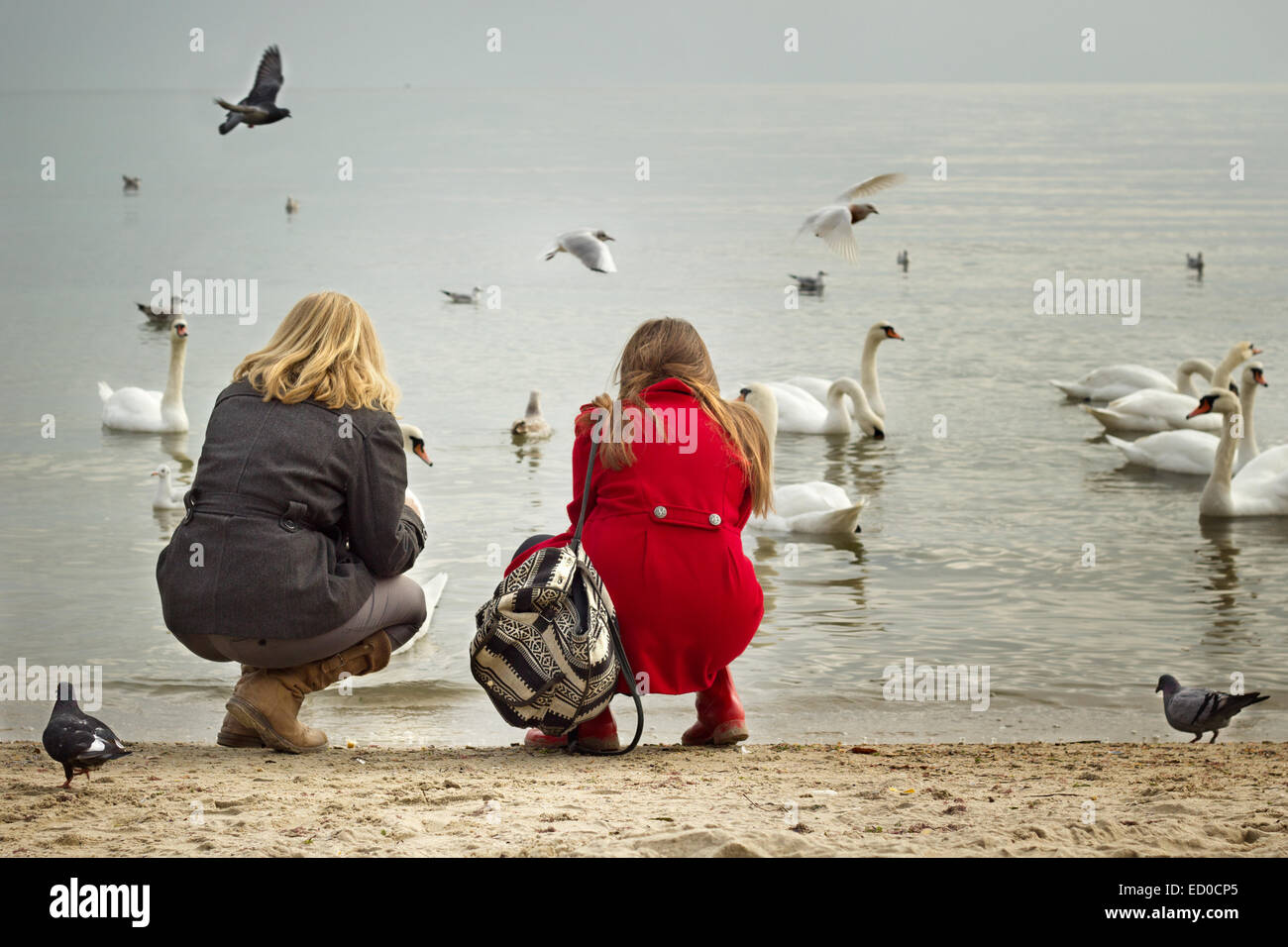 Bulgaria, Varna, Two girls (12-13, 16-17) on beach looking at birds - Stock Image