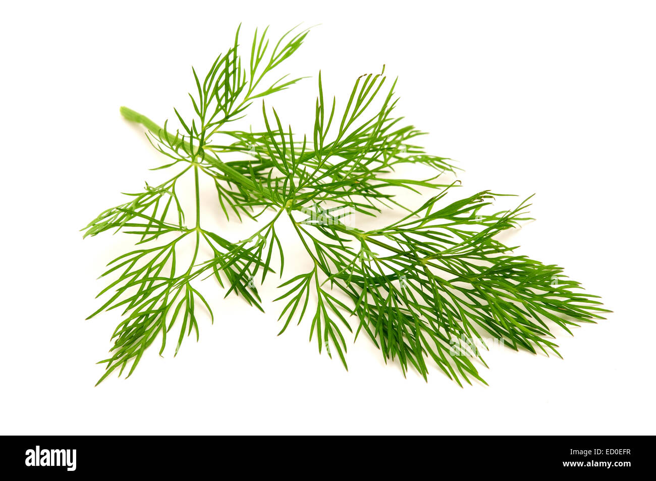 Dill on a white background - Stock Image
