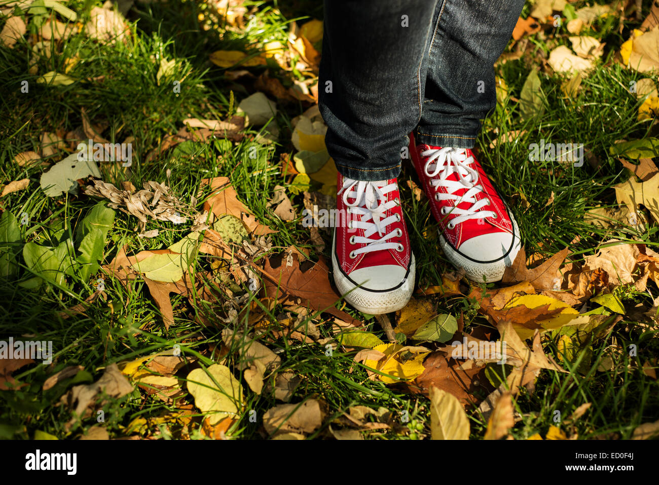 Woman in red sneakers standing in autumn leaves - Stock Image