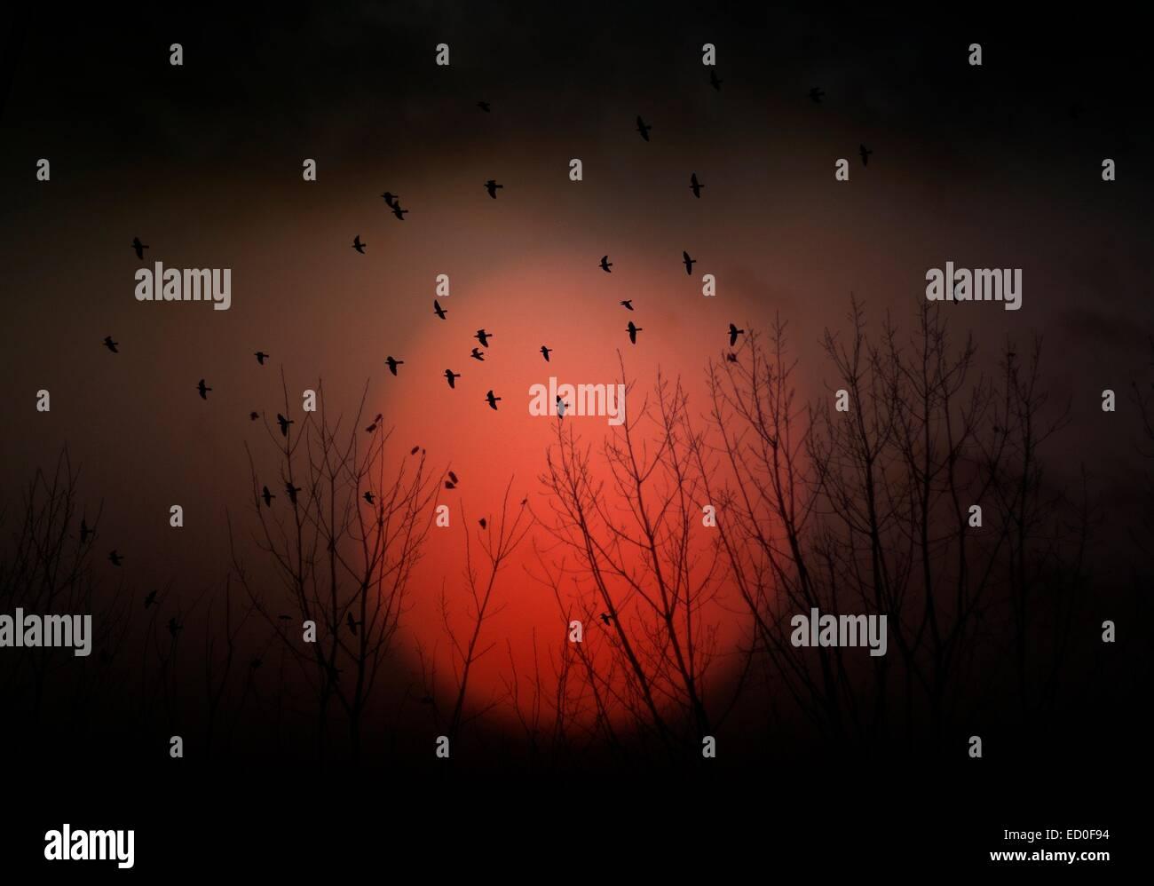 Spain, Madrid, Silhouette of birds - Stock Image