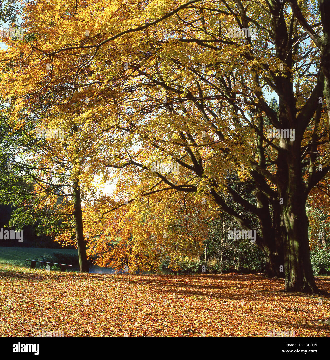 Bramall Hall Park in autumn, Bramhall, Stockport, Greater Manchester, England, United Kingdom - Stock Image