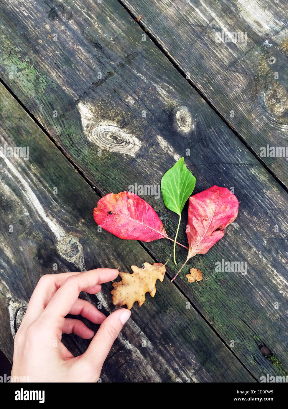Composition of various leaves on wooden plank - Stock Image