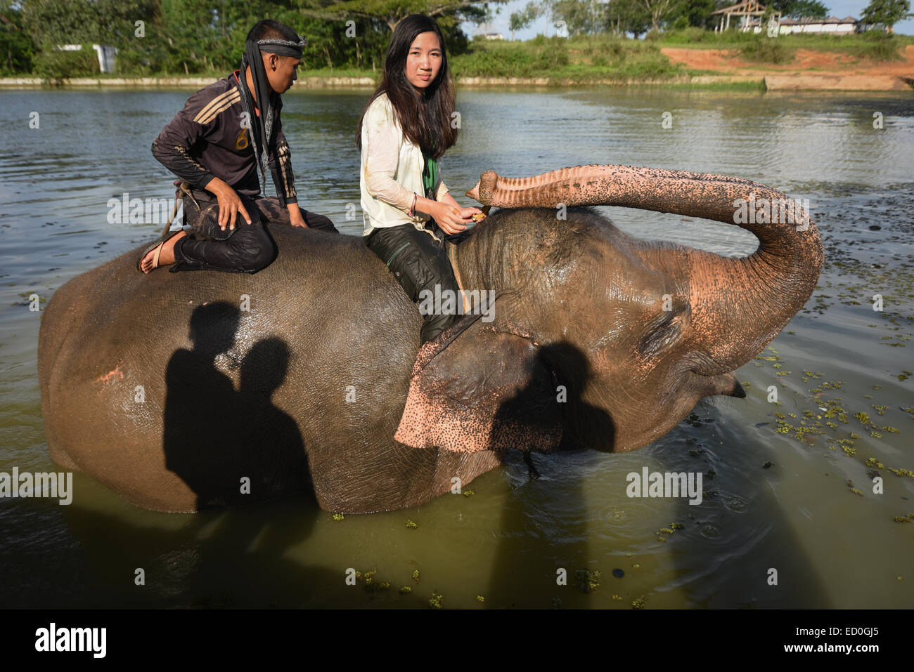A woman volunteer rides an elephant with an elephant keeper after a bath session in Way Kambas National Park. - Stock Image