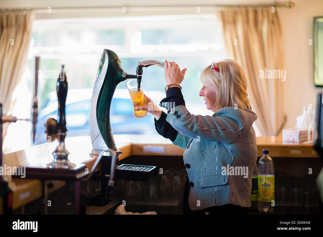 A woman pulling  pouring a pint of cold  lager beer in a bar pub uk - Stock Image