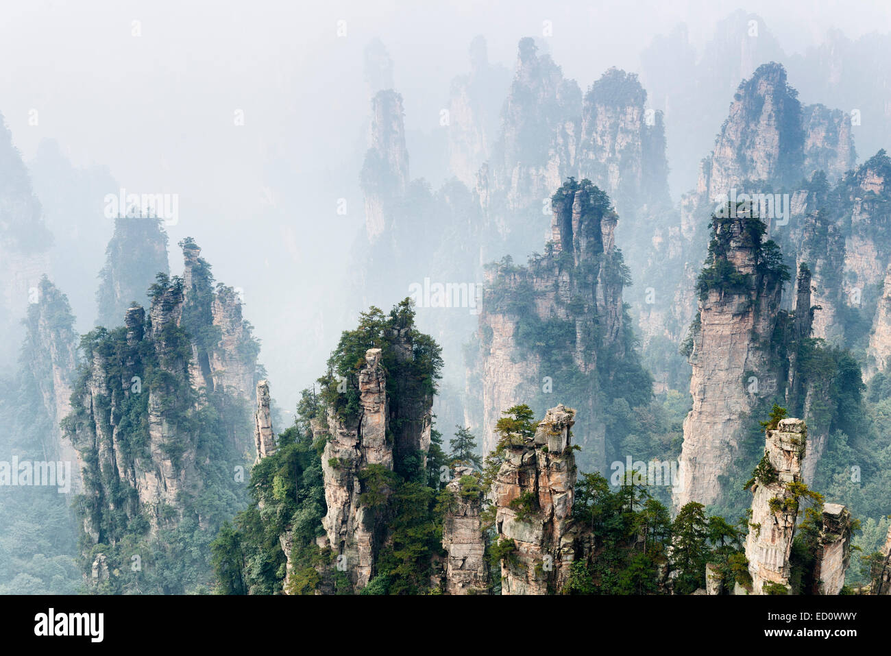 Mountain spires rising from fog at Zhangjiajie National Forest Park, Zhangjiajie, Hunan, China - Stock Image