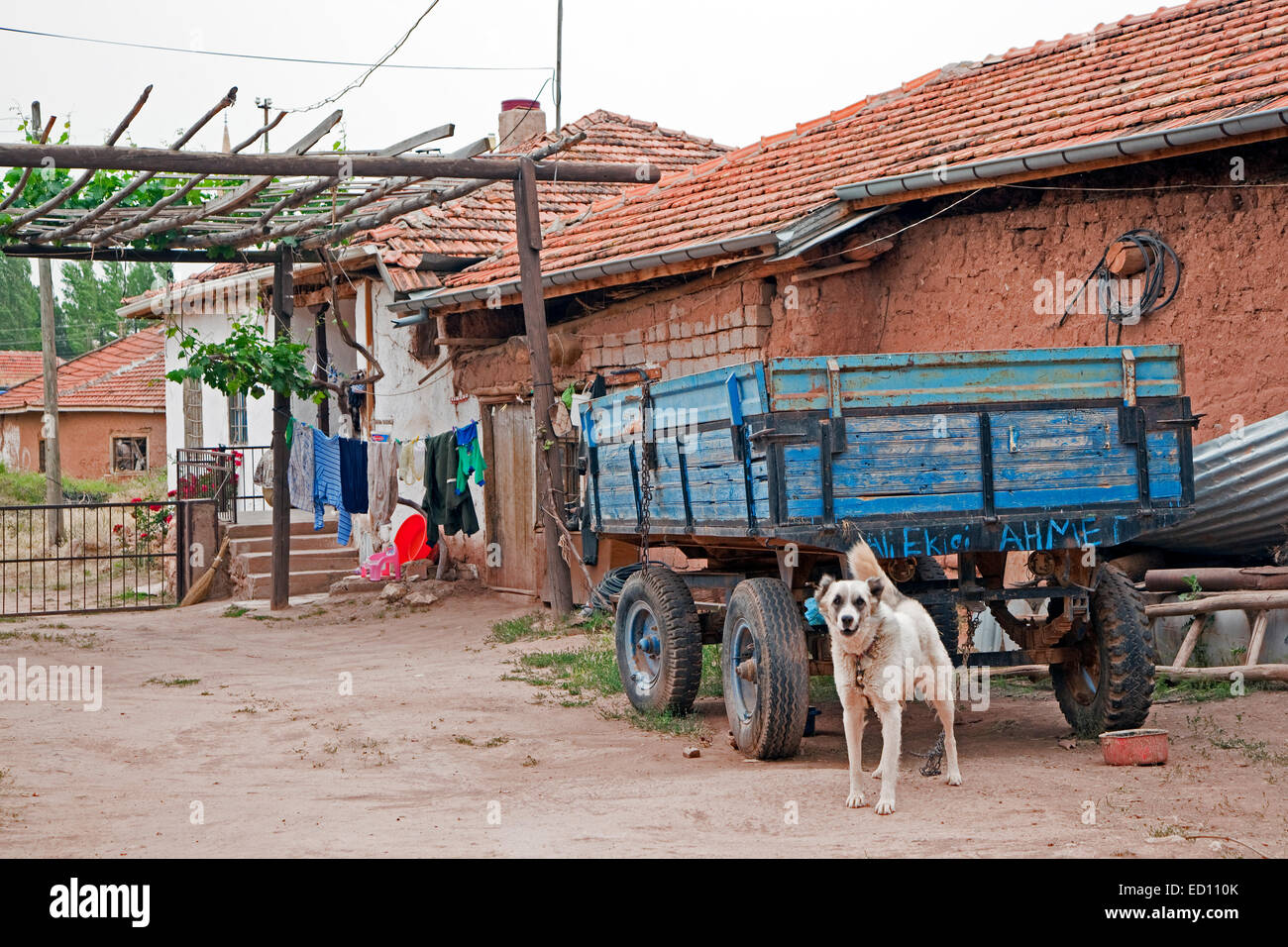 Old wooden cart and dog in agricultural village in rural Western Turkey - Stock Image