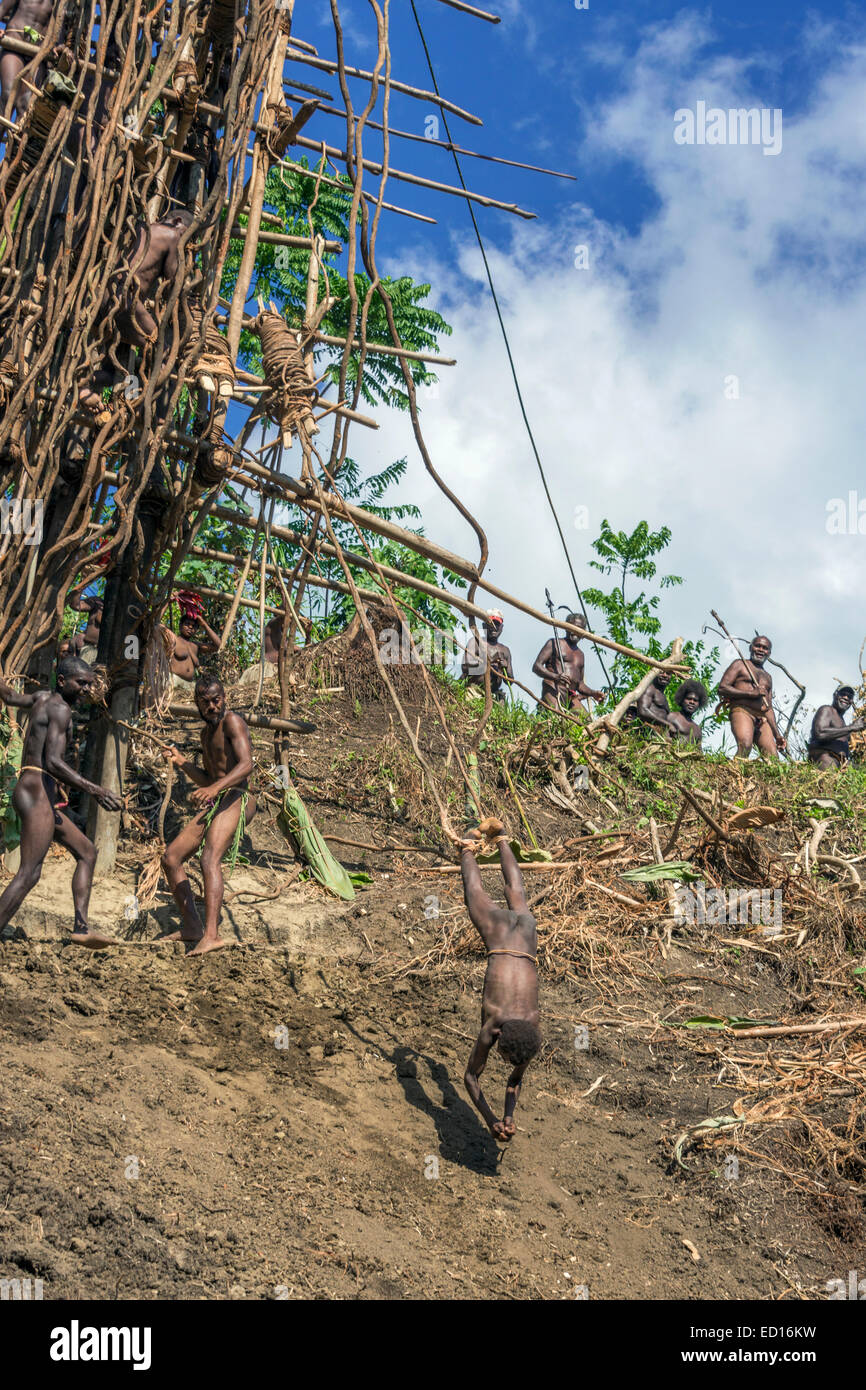 Second boy land diving sequence #6, Pentecost Island, Vanuatu, South Pacific - Stock Image