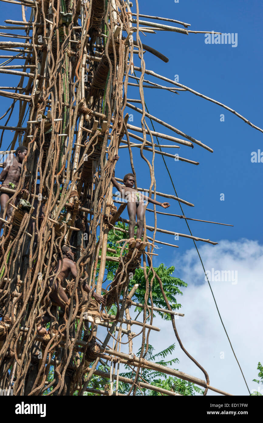 Second boy land diver touch of nerves, Pentecost Island, Vanuatu, South Pacific - Stock Image