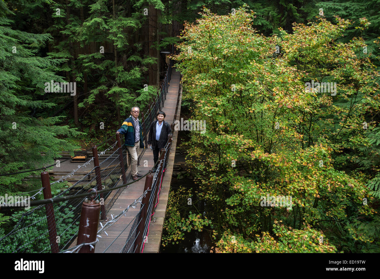 Tree top walk and fall leaves, Capilano Park, Vancouver, British Columbia, Canada - Stock Image