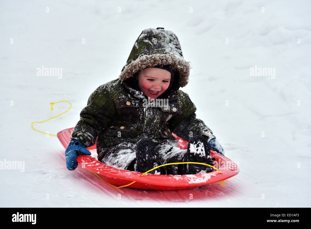 A little boy (2 1/2 yrs) delighted to be sledging - Stock Image