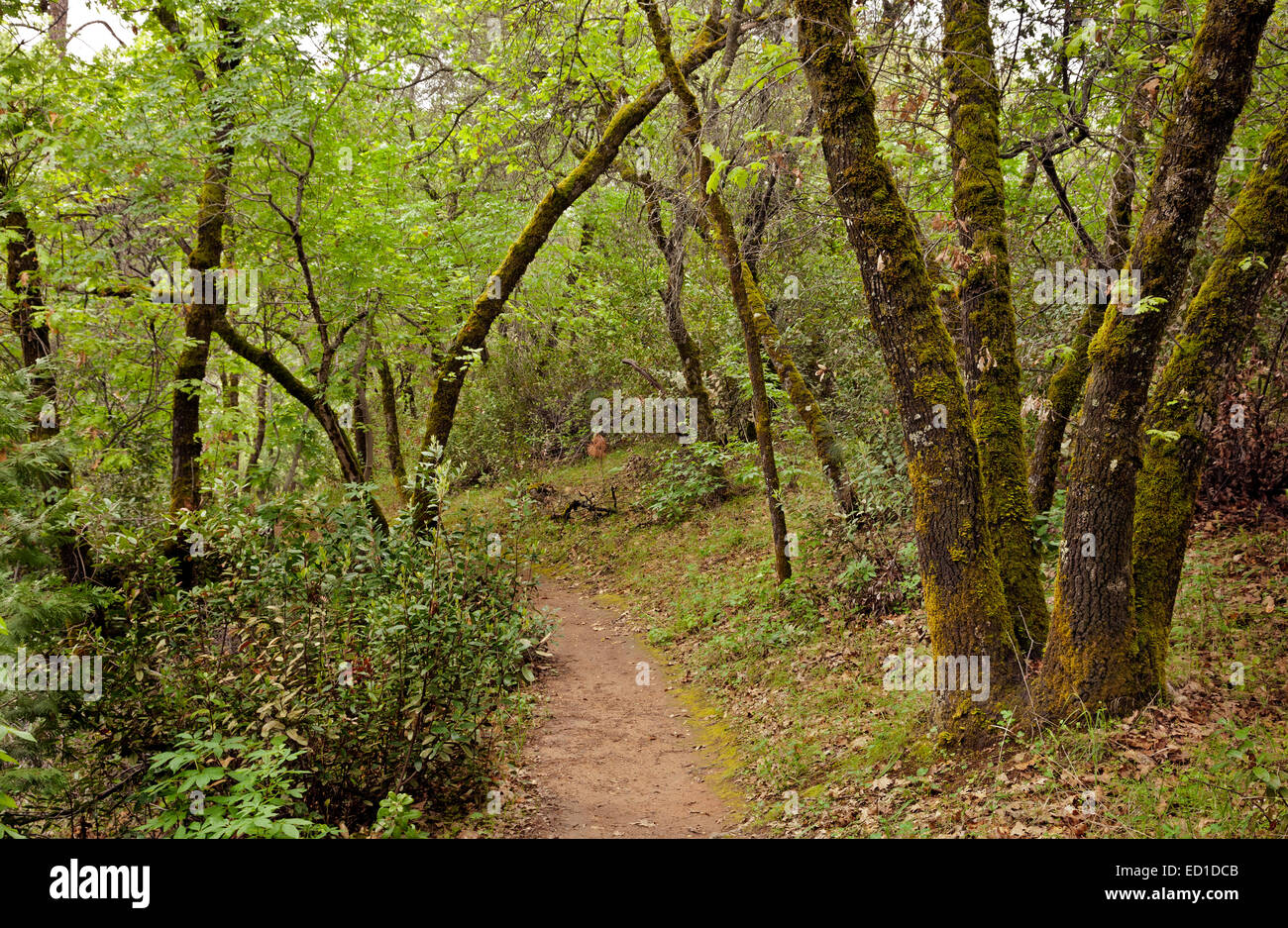 CA02615-00...CALIFORNIA -  The Monroe Ridge Trail in the Marshall Gold Discovery State Historic Park. - Stock Image